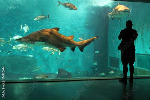 Obraz na dibondzie (fotoboard) akwarium sevilla