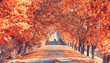 canvas print picture - prachtvolle Herbstallee