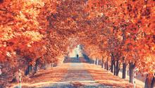 Prachtvolle Herbstallee