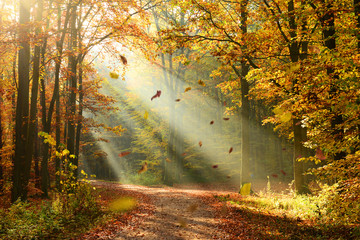 Panel Szklany Podświetlane Inspiracje na jesień Autumn forest
