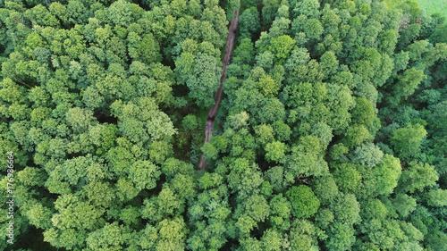 Cadres-photo bureau Olive Aerial landscape of forest