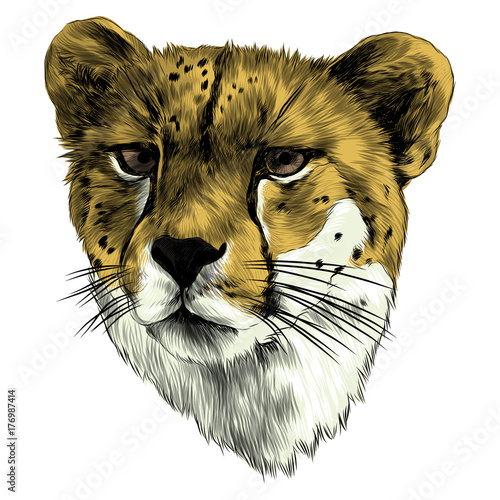 Poster Croquis dessinés à la main des animaux Cheetah head sketch vector graphics color picture