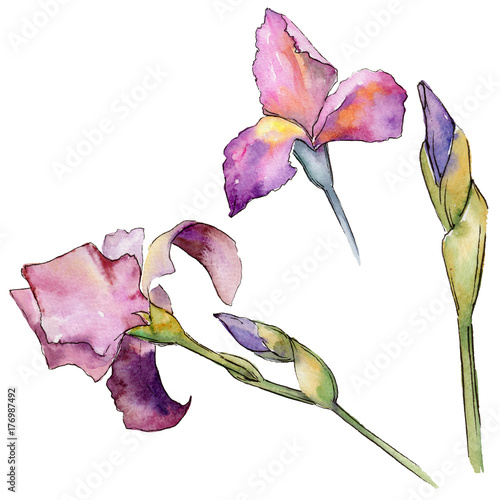 Photo Stands Iris Wildflower iris flower in a watercolor style isolated. Full name of the plant: iris. Aquarelle wild flower for background, texture, wrapper pattern, frame or border.