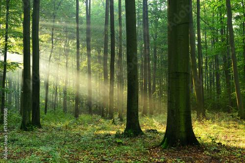 Fototapeten Wald Forest landscape