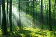 Leinwanddruck Bild - Forest landscape