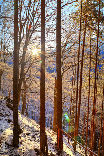 Beautiful landscape with sun rays in winter forest
