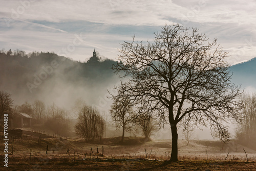 View of dried autumn tree on landscape of foggy forest