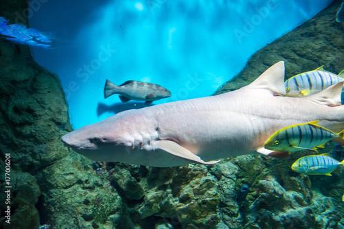 Obraz na dibondzie (fotoboard) Akwarium w Moskwie