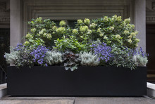 Planter Box With Purple, White, And Green Flowers In New York City