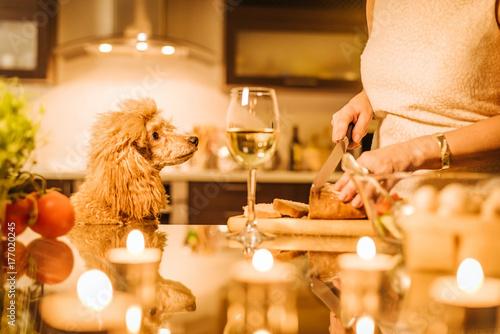 Plakat Młoda kobieta z jej psem gotuje na kuchni. Obiad. Romantyczna koncepcja.