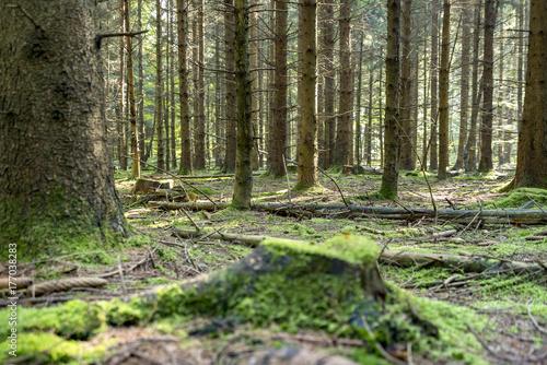 Foto auf Acrylglas Wald im Nebel idyllic forest scenery