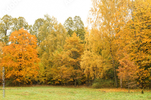 Deurstickers Herfst Beautiful countryside village forest in autumn.