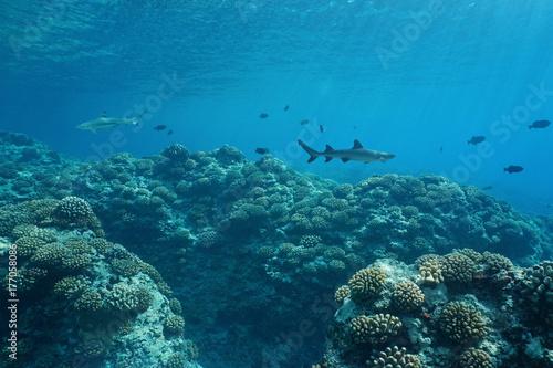 Zdjęcie XXL Podwodne życie morskie seascape na zewnętrznej rafie koralowej wyspy Huahine, na południowym Pacyfiku, Polinezja Francuska, Oceania