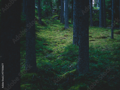 Tuinposter Hout Magic woods in dark