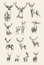 Set Drawn Noble Deers Vector I...