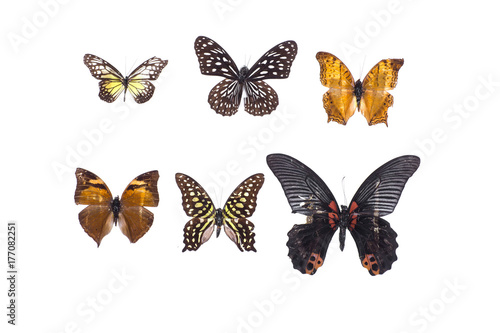 Foto  collection of butterflies on white isolated background