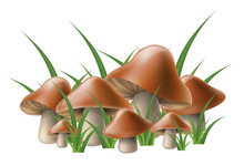 Brown Edible Mushroom Cluster In Grass, Isolated On White. Vector Illustration For Autumn Harvest And Nature Design