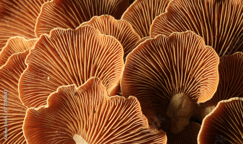 Fotografia  mushrooms forest nature season close