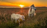 Fototapeta Fototapety z końmi - Horses