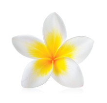 Frangipani Flower Isolated On ...