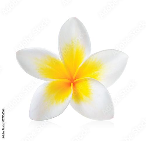 Obraz na plátne Frangipani flower isolated on white background