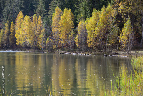 Autumn  with the yellow foliage Canvas Print