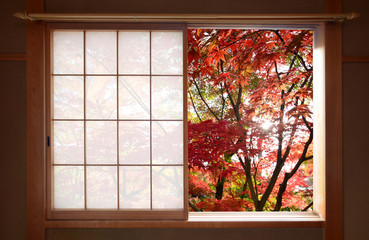Panel Szklany Popularne Sun shining through red autumn maple leaves outside a window in fall