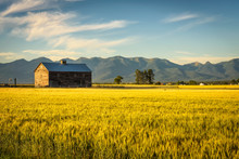 Summer Sunset With An Old Barn...