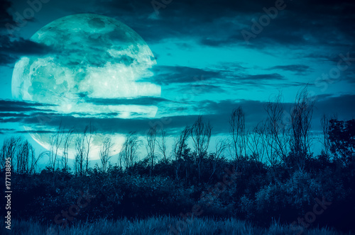 Garden Poster Green blue Colorful sky with dark cloudy and big moon over silhouette of trees in a wilderness area.