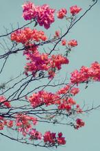 Vibrant Pink/purple Flowers Bl...