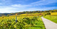 Herbstzeit Mit Weinbergen In Der Pfalz