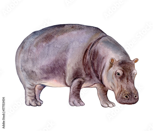 Hippopotamus baby isolated on white background Fototapet