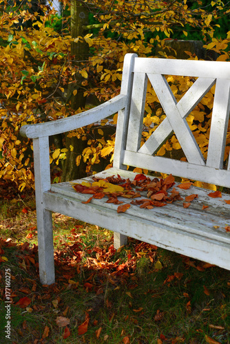 Plakat kolorowe liście bukowe na starej białej drewnianej ławce w ogrodzie