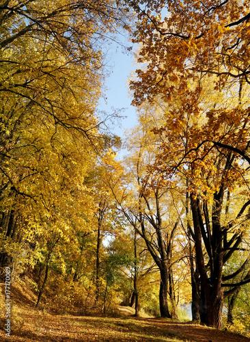Aluminium Prints Autumn Gold leaves on the trees (autumn landscape).