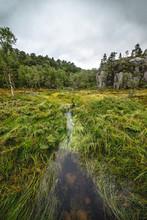 A Creek Winding Through Wetlands