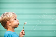 Child Blowing Dandelion Seeds ...