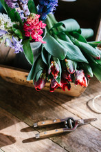 Red Parrot Tulips And Hyacinth...