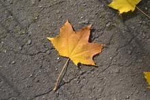 Klonowy Jesienny Listek