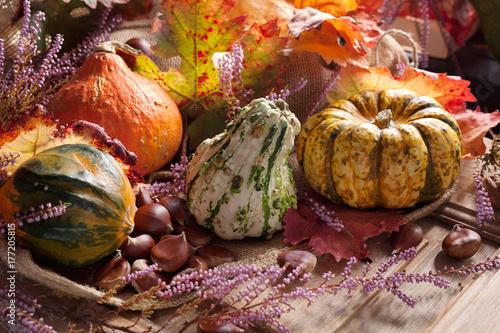 Plakat Jesienny squash