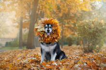 Big Dog With A Wreath Of Leave...