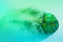 Abstract Background With Peacock Feather Macro Blue And Green