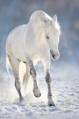 FototapetaBeautiful white horse run in snow field