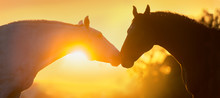 Two Horse Portrait Silhouette ...