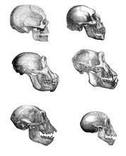 The Collection Of Skulls On A White Background.