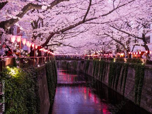 Photo  Festival des Cerisers en fleurs, au canal de Meguro à Tokyo, Japon