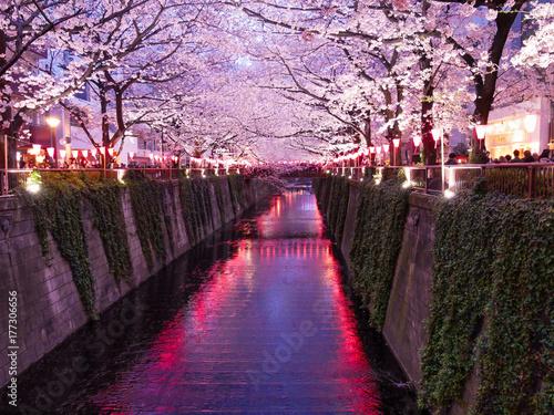 Festival des Cerisers en fleurs, au canal de Meguro à Tokyo, Japon Canvas Print