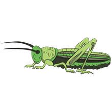 Green Grasshopper On A White B...