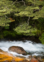 Nature Scene Of River Flowing Over Rocks Past Lush Green Vegetation