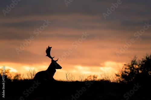 Garden Poster Brazil fallow deer at sunset