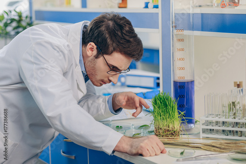 Photo biologist with grass in laboratory